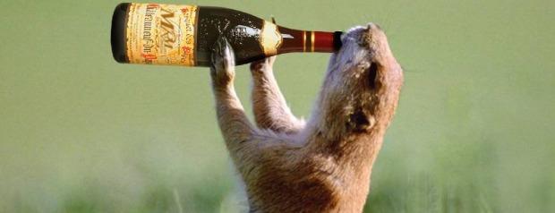 enjoy-drink